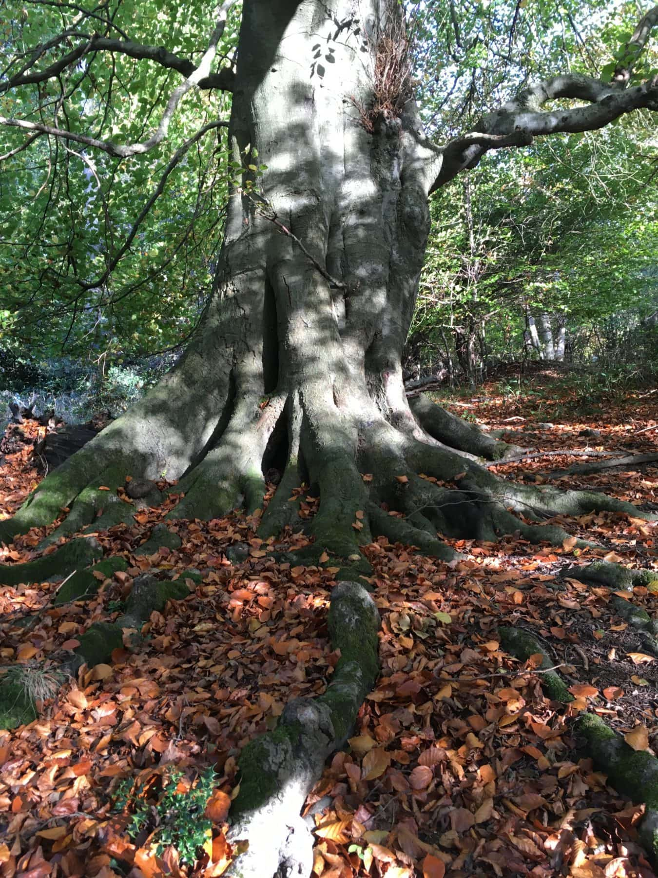 Roots of yoga, yoga in berkhamsted